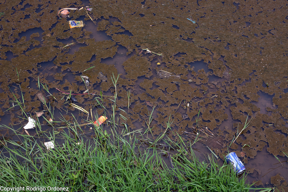 Detail of the polluted water on a rice paddy in Padamulya, Majalaya district, Bandung regency, Indonesia. ..The Citarum river, which runs about 270 kilometers through the province of West Java, is considered to be among the world's dirtiest. Over the last twenty years, the river has been severely polluted by toxic industrial waste, trash and raw sewage. The Citarum is one of the main sources of freshwater for West Java and supplies about 80% of water for Indonesia's capital Jakarta.