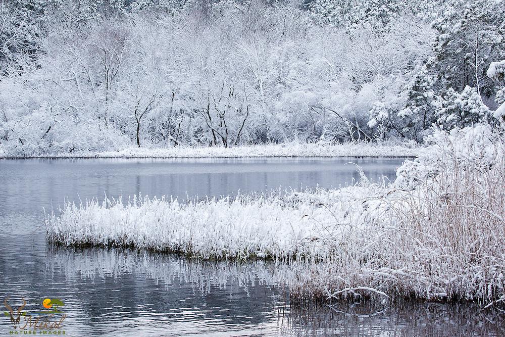 Fresh fallen snow covering marsh grasses and trees