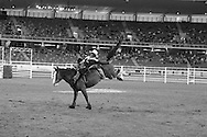 Rodeo 2, Sydney