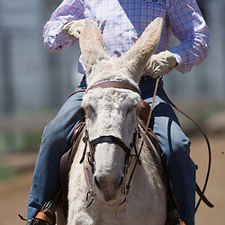 48th Annual Bishop Mule Days Celebration
