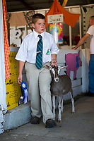 """Hayden Gardner and his goat """"Toka"""" take home the 1st place blue ribbon on Sunday morning during the state qualifying dairy goat judging at Belknap County's 4H Fair.  (Karen Bobotas/for the Laconia Daily Sun)"""