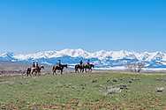 Gathering cattle, branding, Hamm Ranch, Wilsall, MT, Bridger Mountains, Lyle Woosley, Kurt Mraz, Brad Mraz, Randy Jackson, Eric Robinson