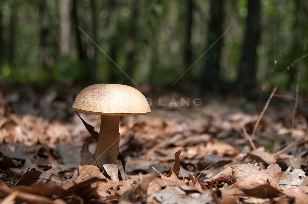 Large mushroom in the woods