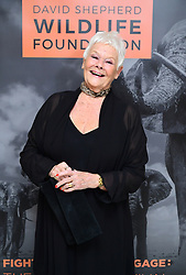Dame Judi Dench arriving at the Wildlife Ball fundraiser at the Dorchester in London.