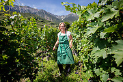 Winemaker Marie- Therese Chappaz pruning the grapes at one of her lots near the Cave M-T-Chappaz in Fully in Valais.