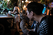 A customer plays with a little owl in a café,  Akihabara-Tokyo. The concept is roughly the same as a cat café, you pay an entry fee and enjoy a drink and a snack while interacting with the animals. The rules are a little stricter than at cat and dog cafes though. Only a certain amount of people are allowed in at the same time and you're not allowed to touch the animals without a member of staff present
