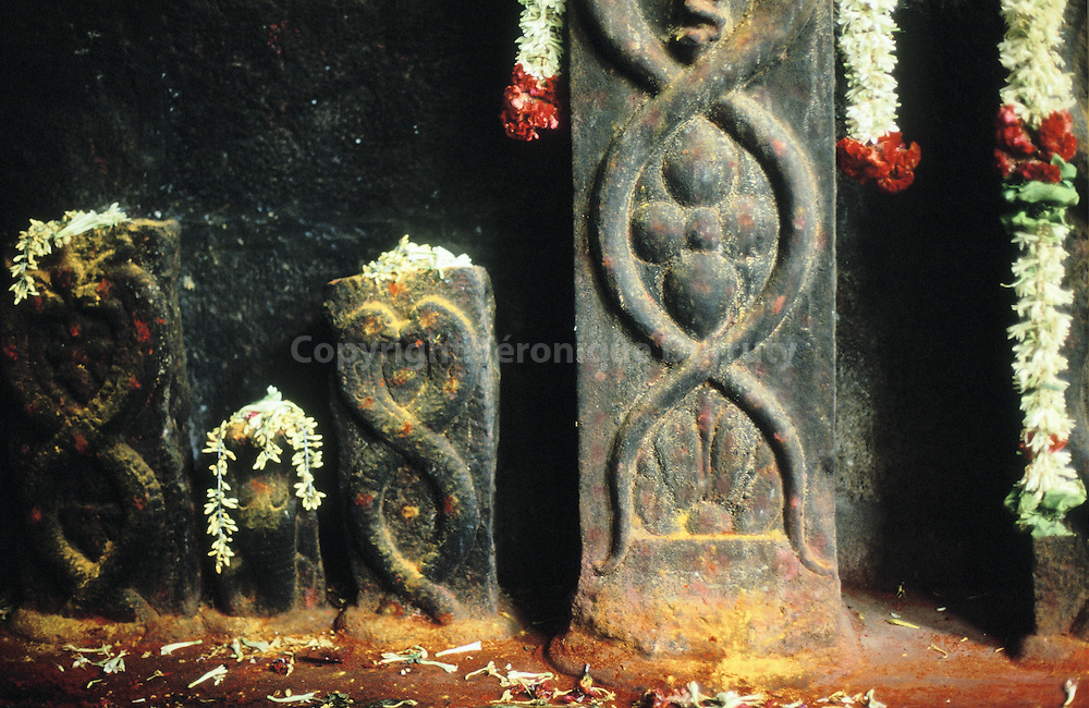 OFFERINGS ON NAJAS  SCULPTURES, VELLORE, INDIA