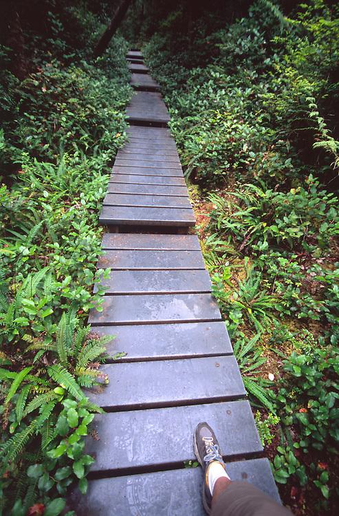 Hiking to Cape Alava, Olympic National Park, Washington, US