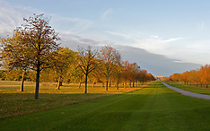 OCT 28 2014 Long Walk - Windsor Great Park