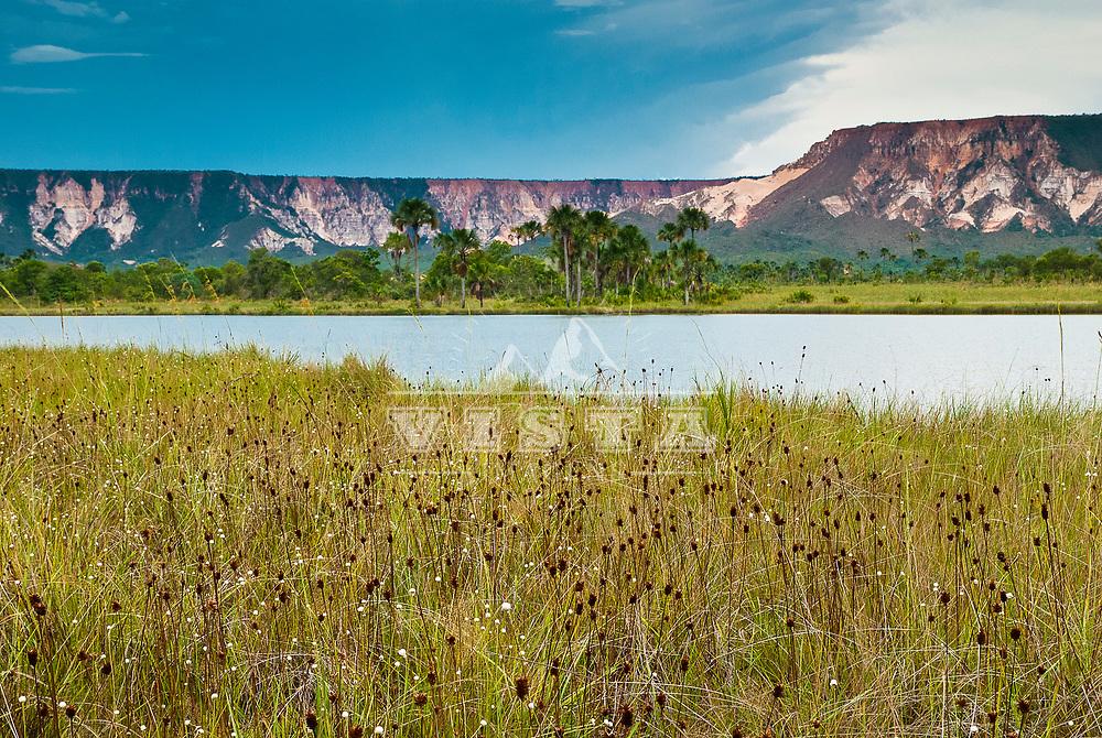 Capim dourado (Syngonanthus nitens) Serra do Espirito Santo, Parque Estadual do Jalapao, Mateiros,  Tocantins, Brasil, foto de Ze Paiva, Vista Imagens.