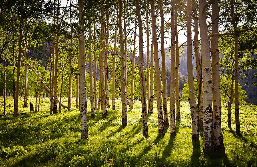 Telluride Colorado landscape