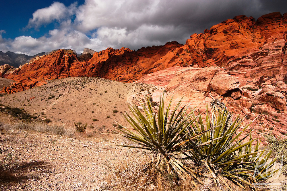 Calico Hills, Red Rock Canyon, Nevada