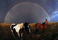 Horses under a rainbow after a storm somewhere in the middle of South Dakota.