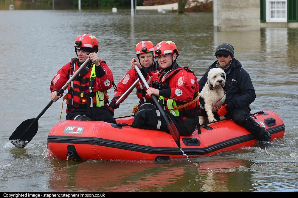 "© Licensed to London News Pictures. 10/02/2014. Old Windsor, UK. Firefighters bring dog ""Beau"" to dry land after carrying out a series of rescues in the village centre.  Flooding in OLD WINDSOR in Berkshire today 10th February 2014 after the River Thames burst its banks. The Environment Agency has issued 14 Severe Flood Warnings alone the Thames. Photo credit : Stephen Simpson/LNP"