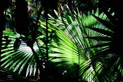 AUSTRALIA QUEENSLAND EUNGELLA NATIONAL PARK 21FEB08 - Tropical vegetation at the Eungella National Park, Queensland, Australia...jre/Photo by Jiri Rezac..© Jiri Rezac 2008..Contact: +44 (0) 7050 110 417.Mobile:  +44 (0) 7801 337 683.Office:  +44 (0) 20 8968 9635..Email:   jiri@jirirezac.com.Web:    www.jirirezac.com..© All images Jiri Rezac 2007 - All rights reserved.