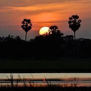 Sunset behind palms, Thailand.