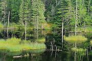 WEtland<br /> near Savant Lake<br /> Ontario<br /> Canada