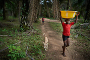 Rebecca Kungbana, 12 years old carries a bucket of water on her head from a water pump  in the village of Baadu, Tankoro chiefdom, Kono district, Sierra Leone on March 25, 2017.
