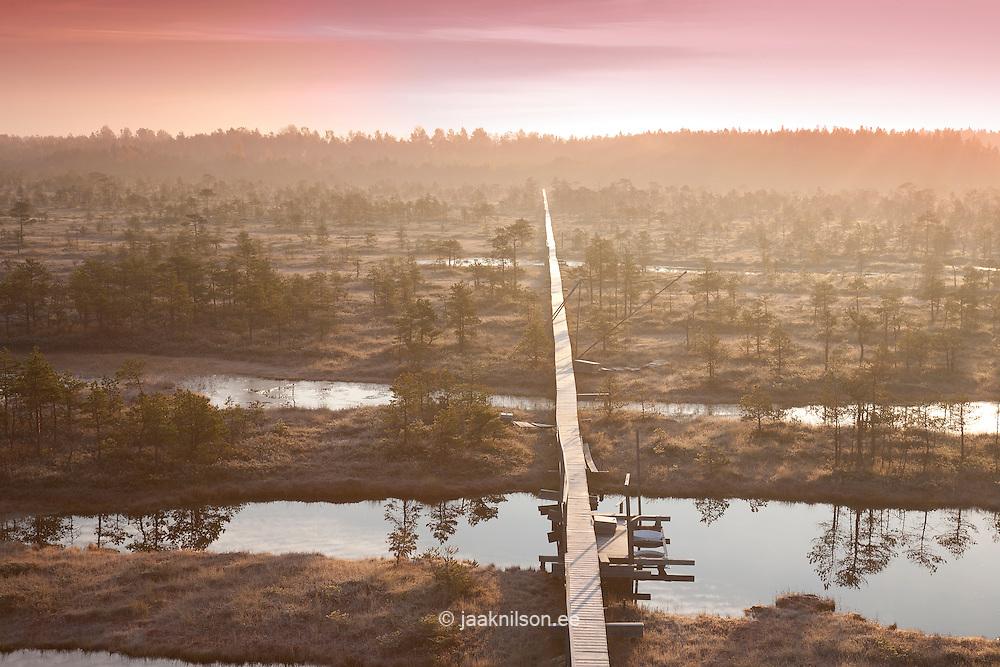 Morning Light in Misty Männikjärve Bog, Endla Nature Reseve, Jõgeva County, Estonia