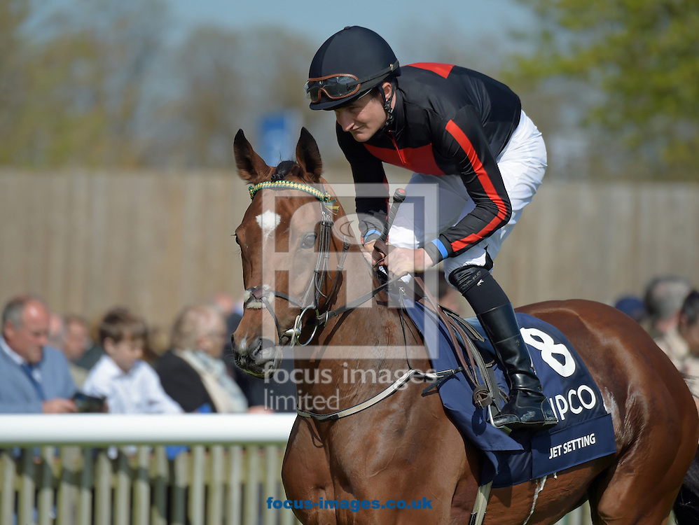 A preview of this weekend's favourites in UK racing.<br /> Picture by Martin Lynch/Focus Images Ltd 07501333150<br /> 13/10/2016<br /> <br /> <br /> Original Caption:<br /> Jet Setting at Newmarket 1-5-16.
