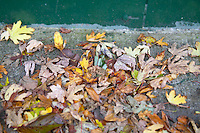 Close up of fallen leaves on a path in Dublin Ireland