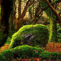 Moosy Rock in Kerry Forest, Ireland / ba061