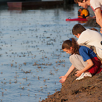 Children watch the swarming of the long-tailed mayfliy (Palingenia longicauda) on the river Tisza in Tiszainoka (some 135 km south-east from Budapest), Hungary on June 12, 2011. ATTILA VOLGYI
