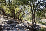 Location: Angel Falls, Bass Lake, CA