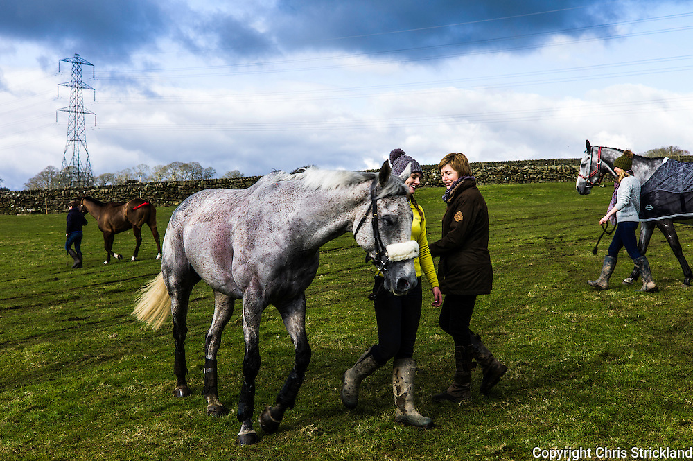 Corbridge, Northumberland, England, UK. 28th February 2016. ProbablyGeorge enjoys a warm down after racing well at the Tynedale Hunt annual Point to Point horse racing fixture.