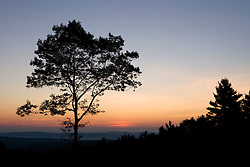 An oak tree in silhouette at dawn on Wilson Hill in Deering, New Hampshire.  Society for the Protection of New Hampshire Forests' High Five peserve.