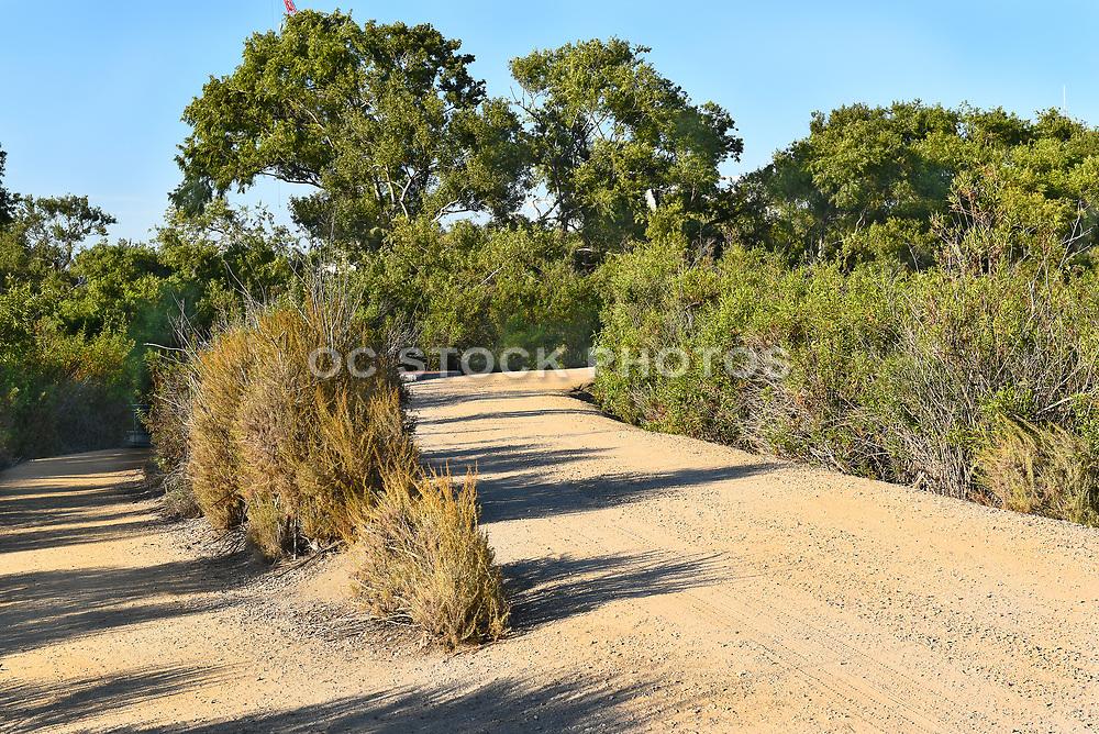 San Joaquin Marsh Fork in the Trail