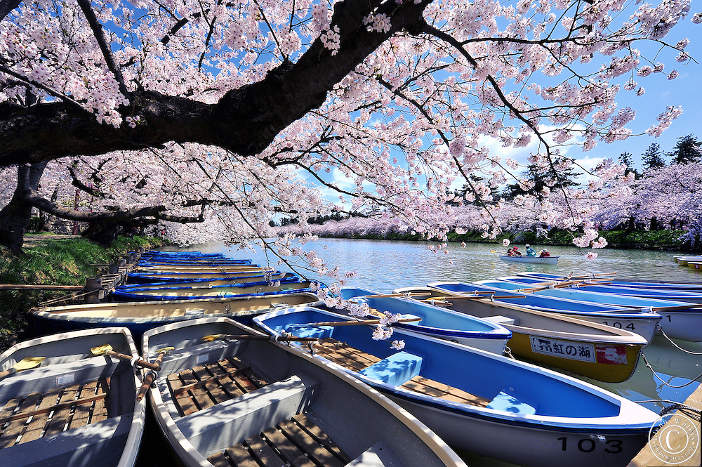 The northern moat of Hirosaki Castle Park in spring time.  Tourists can row the boats along the moat which is adorned with beautiful cherry blossoms.<br /> Hirosaki castle, located in Northern Honshu, Japan. Over 3,000 cherry trees come into bloom from mid April to early May.