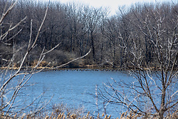 Waterfowl gather in a small cove on Evergreen Lake in late winter in Illinois