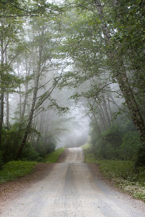 Coastal fog shrouds the forest along a gravel road in Prairie Creek Redwoods State Park, northern California.