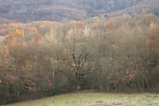 late autumn woodland France Languedoc Aude Razes