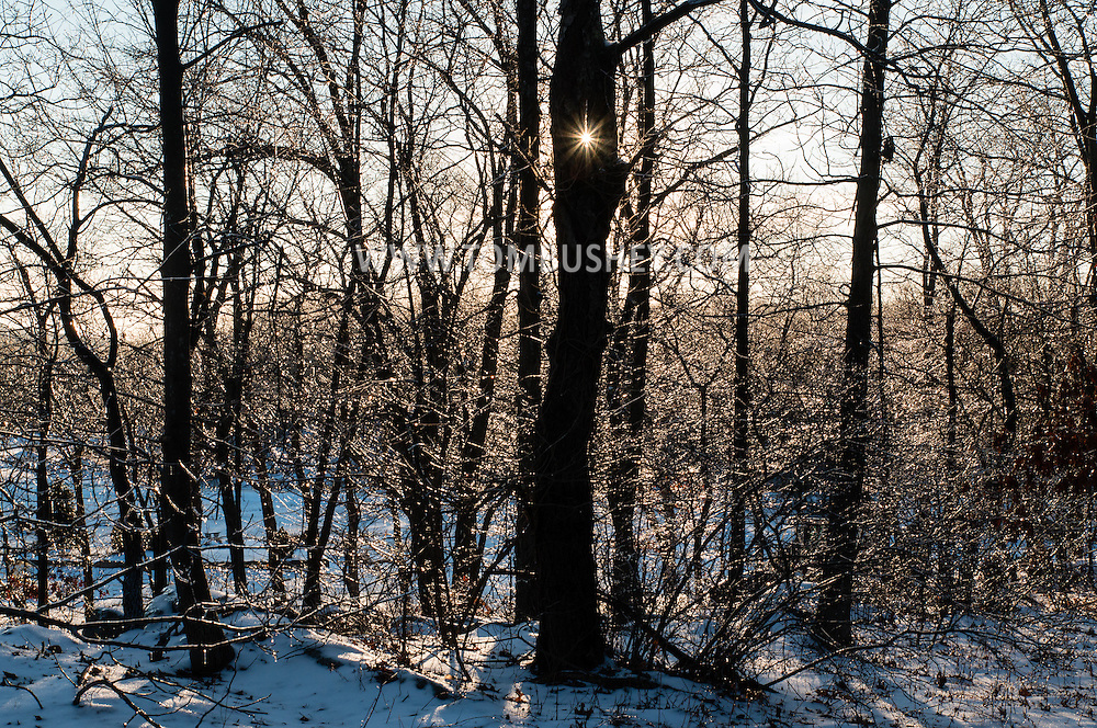 Greenville, New York - Branches are coated in ice the afternoon after a winter storm brought snow and freezing rain on Jan. 13, 2015.