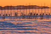 Sunset and shelterbelt trees<br /> La Pocatiere<br /> Quebec<br /> Canada