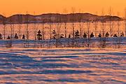 Sunset and shelterbelt trees<br /> La Pocatiere<br /> Quebec<br /> Canada