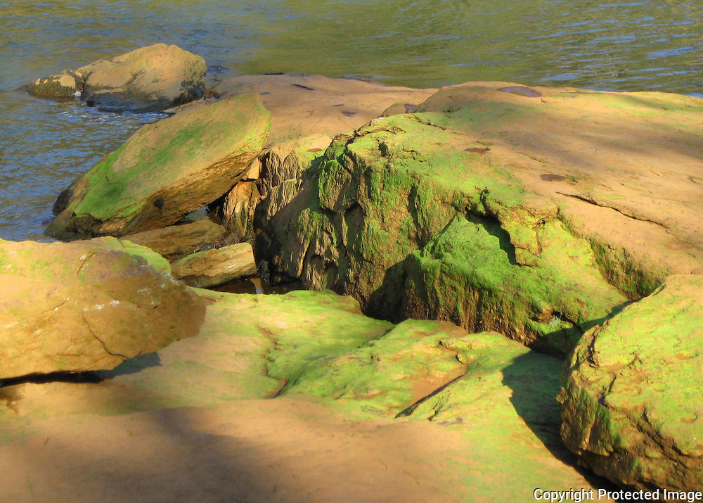 Chattahoochee River Georgia. River boulders covered in green algae.