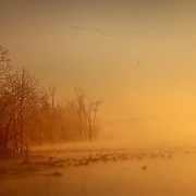 January 31, 2010 - Lexington, Kentucky, USA. As the sun rose, Canada geese rested on a frozen reservoir after a night of single-digit temperatures. (Credit Image: © David Stephenson/ZUMA Press)