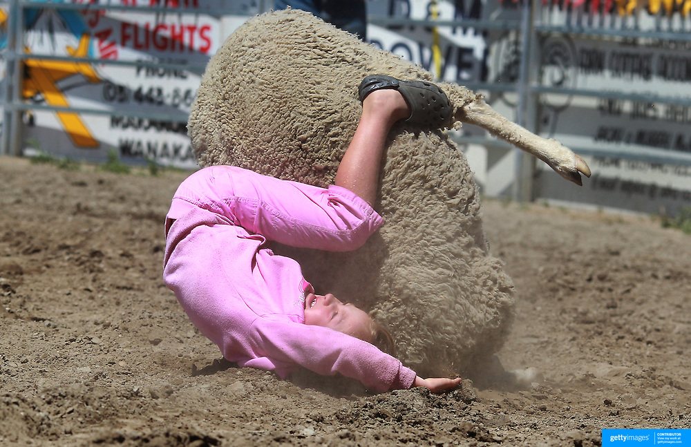 A young girl falls off a sheep during the kids sheep ride competition at the Wanaka Rodeo. Wanaka, South Island, New Zealand. 2nd January 2012