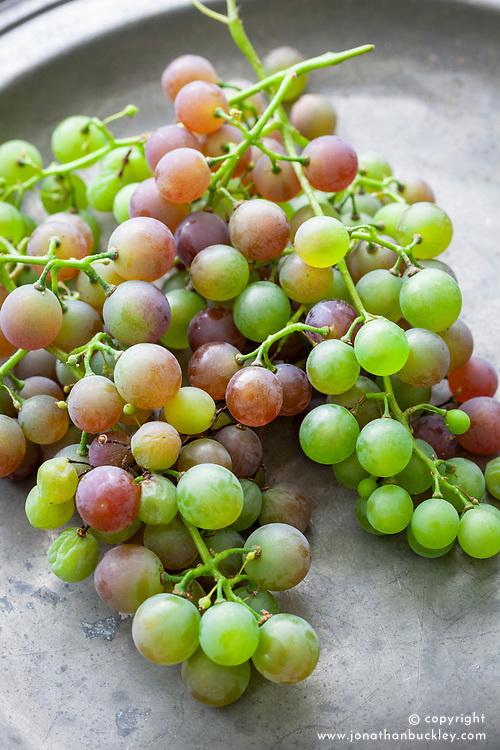 Strawberry grape - Vitis labrusca hybrid