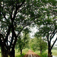 Trees covering muddy road outside Mandalay