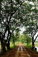 Trees covering muddy road outside Mandalay
