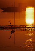 Sailboat, Sunrise, Sunset, Heron, Great Blue Heron, California