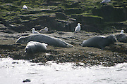 Farne Islands 06-05-06