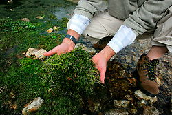UK ENGLAND HAMPSHIRE ST MARY BOURNE 12AUG06 - Peter Evans displays aspects of biodiversity under watercress in the Bourne river near the Watercress production and packaging facility near St. Mary Bourne, Hampshire. Local residents accuse the company's controversial practices of applying nutrients and salad washing to have caused environmental damage in the Bourne valley...jre/Photo by Jiri Rezac..© Jiri Rezac 2006..Contact: +44 (0) 7050 110 417.Mobile:  +44 (0) 7801 337 683.Office:  +44 (0) 20 8968 9635..Email:   jiri@jirirezac.com.Web:    www.jirirezac.com..© All images Jiri Rezac 2006 - All rights reserved.