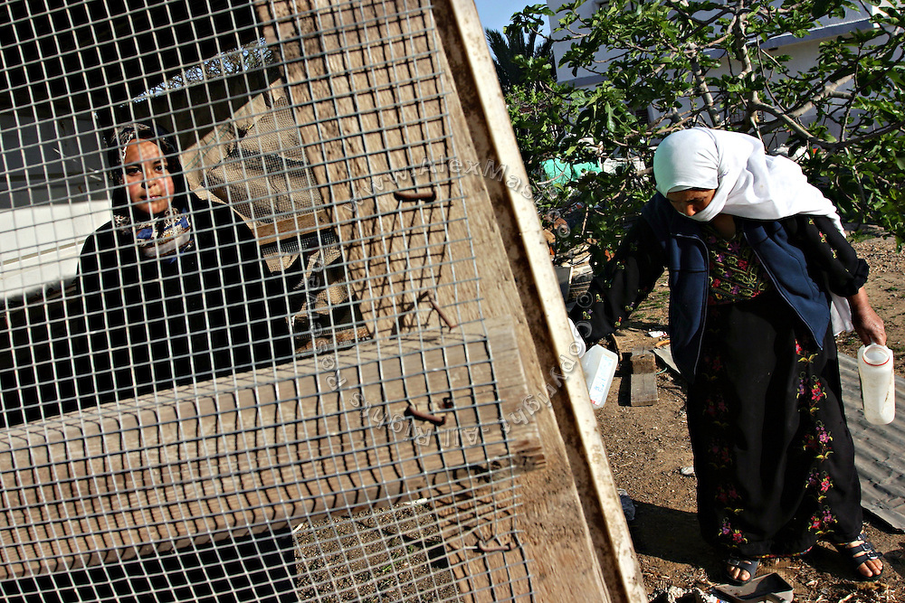 Women are collecting eggs in the recognised Bedouin township of Rahat. Numbering around 200.000 in Israel, the Bedouins constitute the native ethnic group of these areas, they farm, grow wheat, olives and live in complete self sufficiency. Many of them were in these lands long before the Israeli State was created and their traditional lifestyle is now threatened by subtle Governmental policies. The seven Bedouin towns already built are all between the 10 more impoverished towns in Israel..