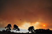 Huge forest fire rages on the Carmel Mountain South of Haifa Israel. International efforts to contain the fire have been going on for the last 3 days. December 2th 2010.