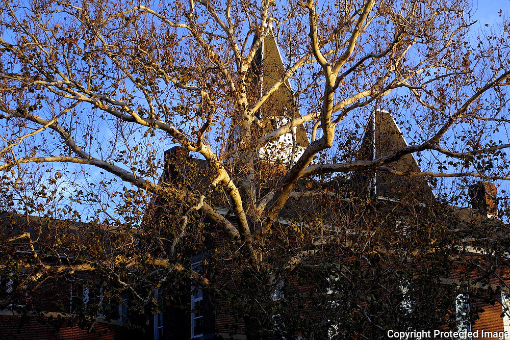 Drake University's Old Main hides behind the branches of a tree, beginning to lose it's autumn leaves.  photo by david peterson  Des Moines, Ia.